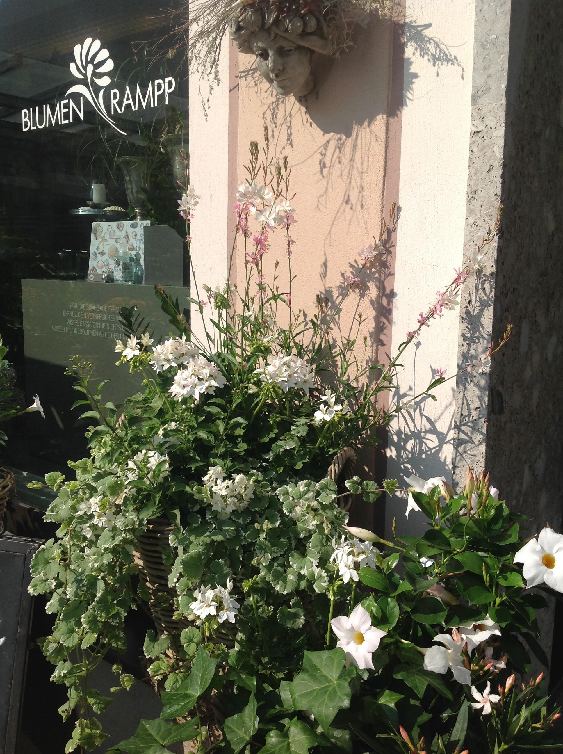 2018-BLUMEN-RAMPP-Pfingstmarkt-g-e1526282406715