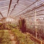 Die erste Gärtnergeneration