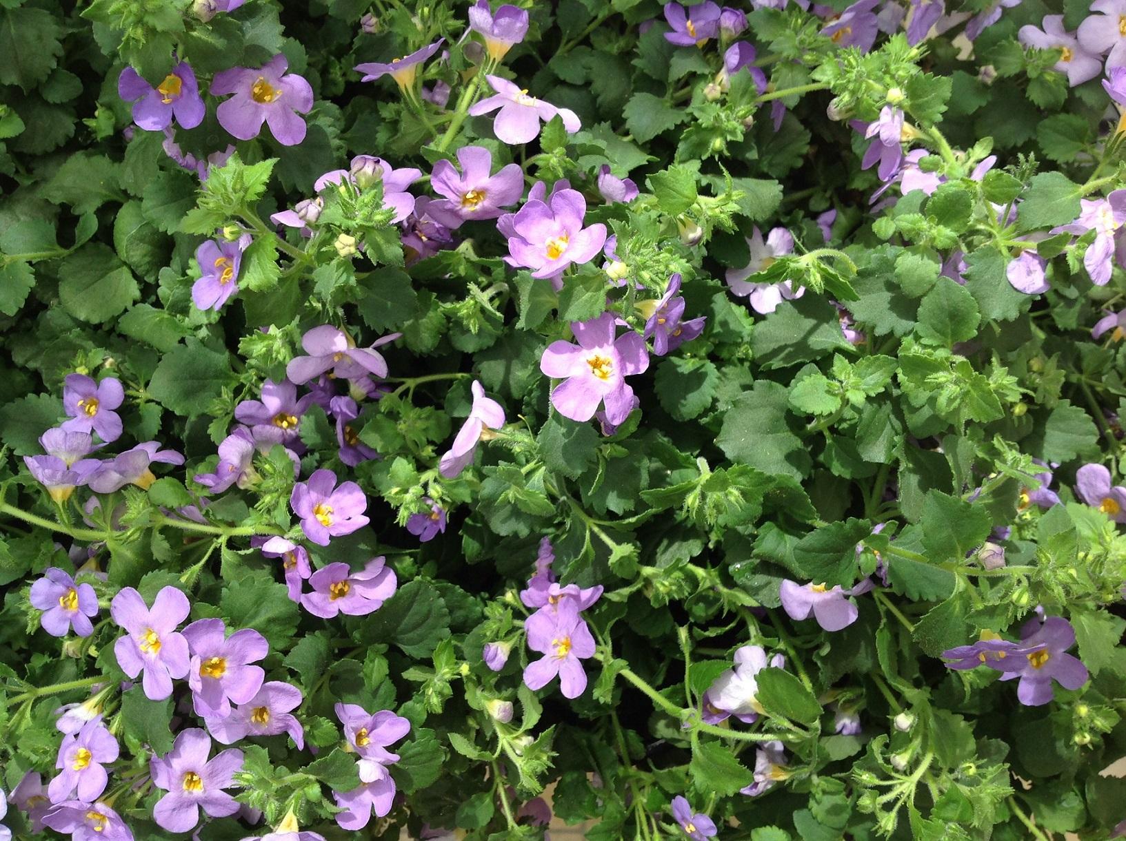 BLUMEN-RAMPP-Sommerblumen