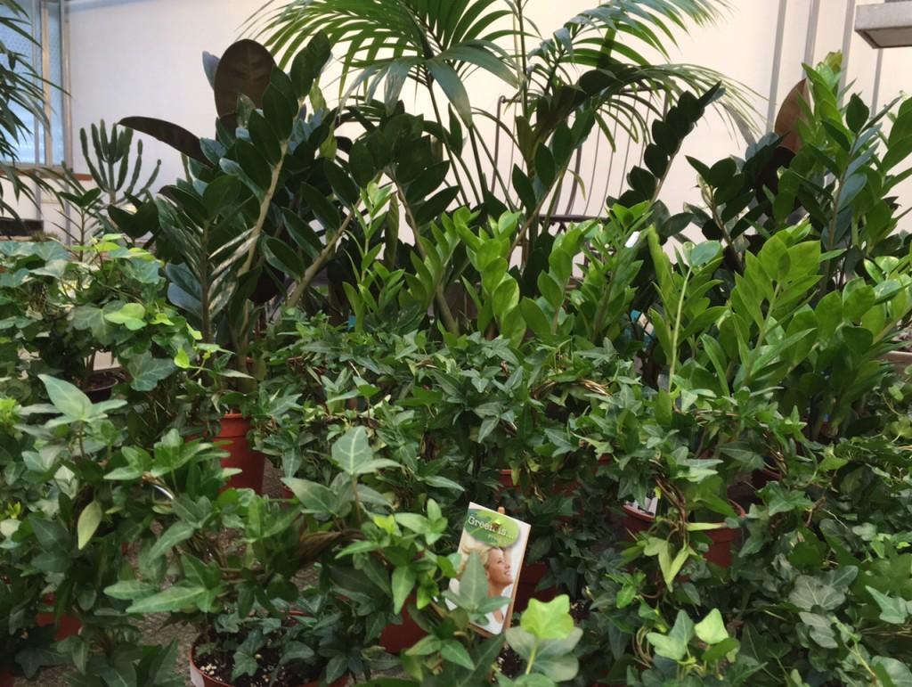 blumen rampp das neue gr n warum wir mit pflanzen besser wohnen und arbeiten. Black Bedroom Furniture Sets. Home Design Ideas
